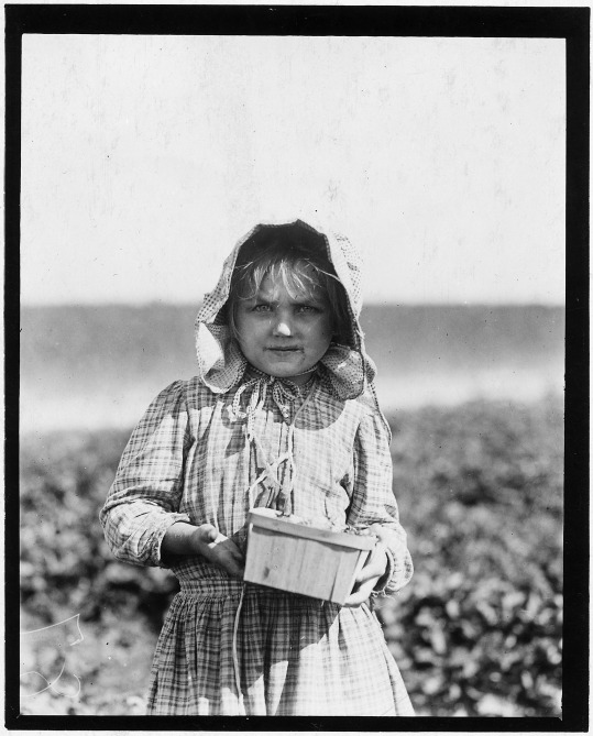 alberta_mc_nadd_on_chester_truitt27s_farm-_alberta_is_5_years_old_and_has_been_picking_berries_since_she_was_3-_her-_-_nara_-_523320