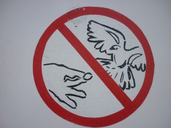dont-feed-the-birds
