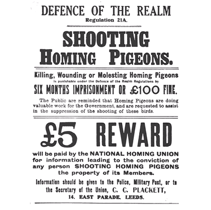 Shooting_Homing_Pigeons